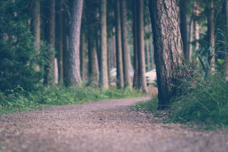 Ίχνος πεζοπορώ τουριστών στα μαγικά ευμετάβλητα ξύλα - εν μέρει θολωμένη φωτογραφία, έννοια του ταξιδιού και τουρισμός στοκ φωτογραφία