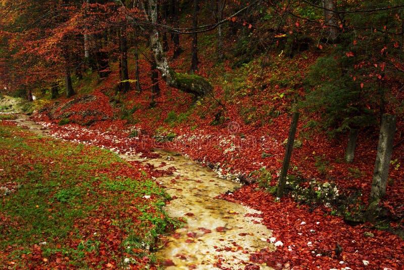 Ίχνος σε ένα δάσος κατά τη διάρκεια του φθινοπώρου στοκ εικόνες
