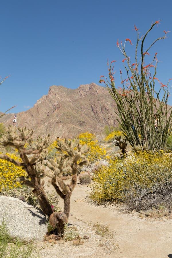 Ίχνος στην έρημο στην πλήρη άνθιση στοκ φωτογραφία με δικαίωμα ελεύθερης χρήσης