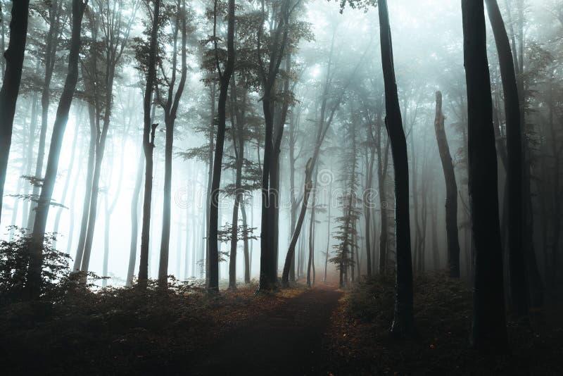 Ίχνος στο σκοτεινό ομιχλώδες δασικό σκληρό φως που προέρχεται από τη αριστερή πλευρά Ενδιαφέρον δέντρο στο τέλος της πορείας στοκ εικόνα με δικαίωμα ελεύθερης χρήσης