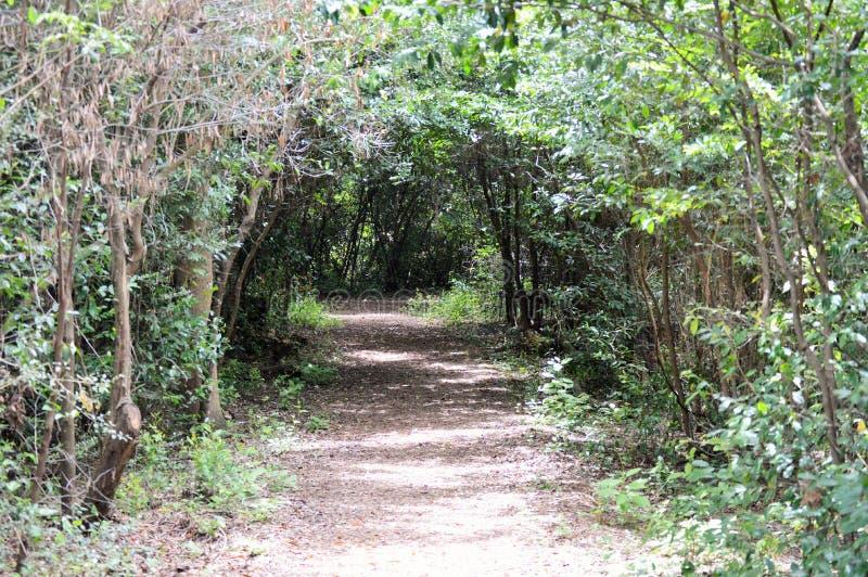 Ίχνος φύσης μέσω του δάσους στοκ φωτογραφία