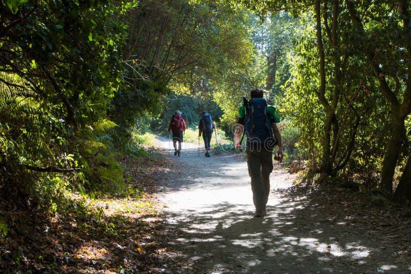 Ίχνος Camino de Σαντιάγο, Γαλικία, Ισπανία στοκ εικόνα