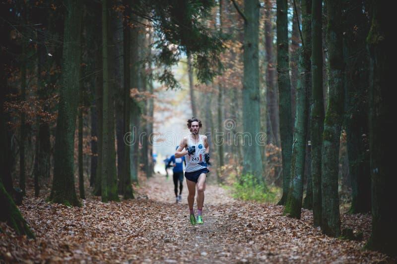 Ίχνος Krkavec της Hannah Πίλζεν Νεαρός άνδρας που τρέχει γρήγορα στην πορεία στο φθινοπωρινό δάσος στοκ φωτογραφία με δικαίωμα ελεύθερης χρήσης