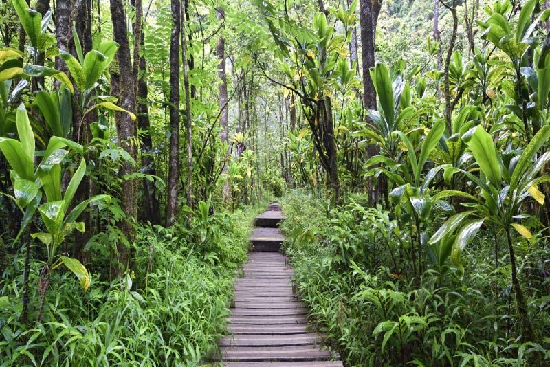 Ίχνος Pipiwai, κρατικό πάρκο Kipahulu, Maui, Χαβάη στοκ φωτογραφία με δικαίωμα ελεύθερης χρήσης