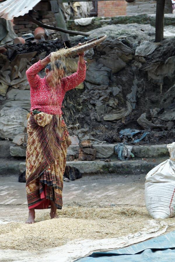 Αέρας που επιλέγει το ρύζι στο Νεπάλ στοκ φωτογραφίες