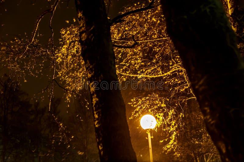 Αέρας στο πάρκο νύχτας durig το χιόνι στοκ εικόνες με δικαίωμα ελεύθερης χρήσης
