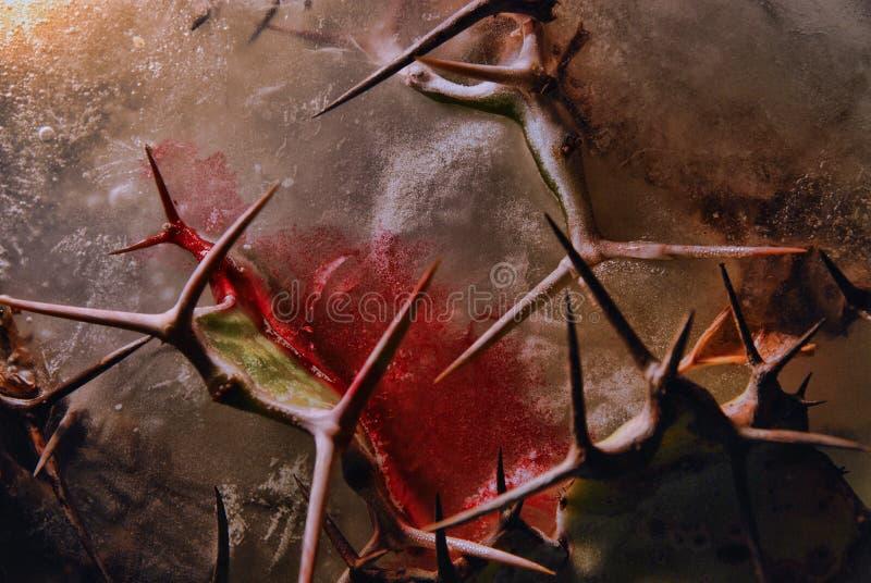 Αίμα, αγκάθια, πάγος στοκ εικόνα με δικαίωμα ελεύθερης χρήσης