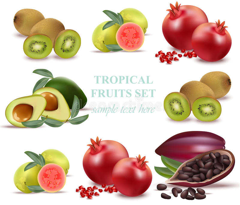 Αβοκάντο θερινών φρούτων, papaya, ακτινίδιο, ρόδι, φρέσκο κακάο, καθορισμένο διάνυσμα συλλογής γκοϋαβών απεικόνιση αποθεμάτων