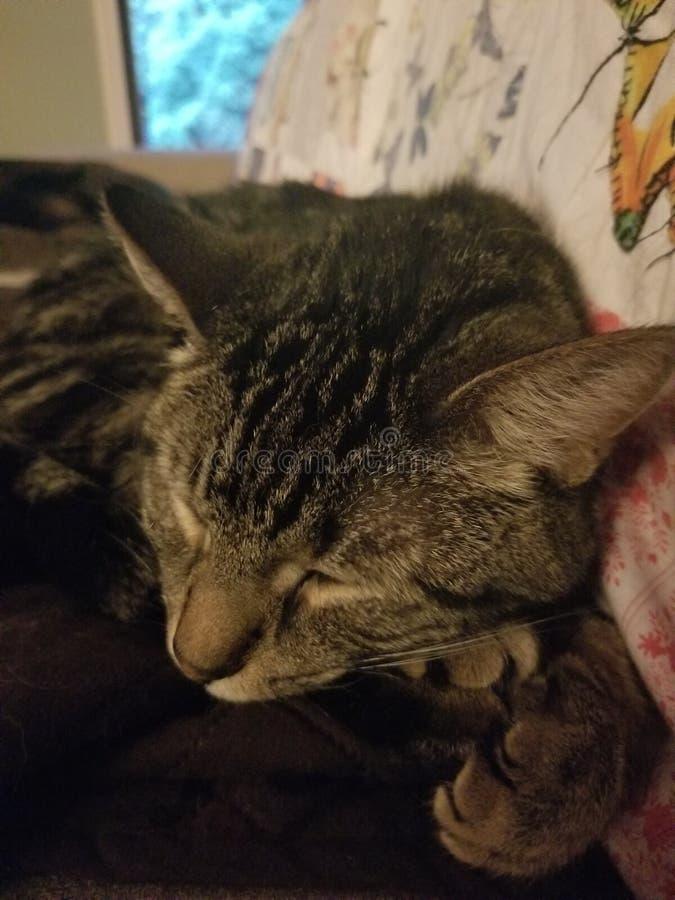 Αγάπη γατακιών στοκ εικόνες