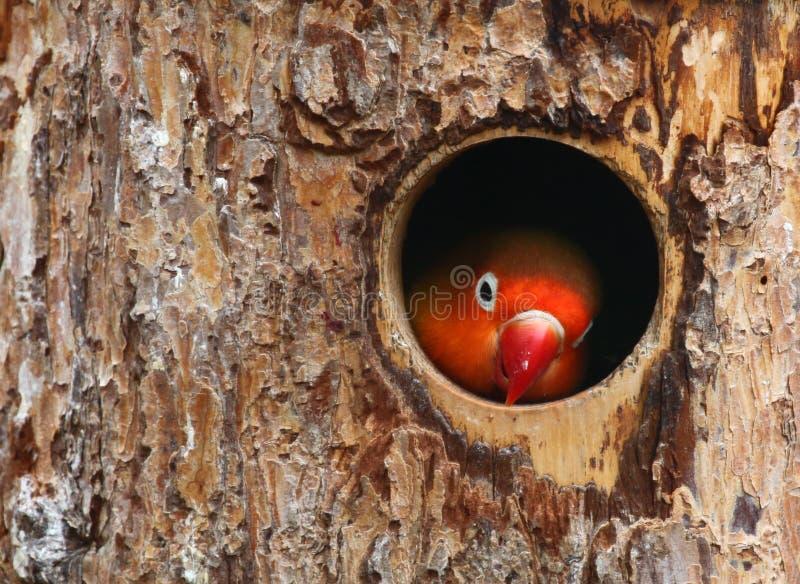 αγάπη πουλιών στοκ εικόνες
