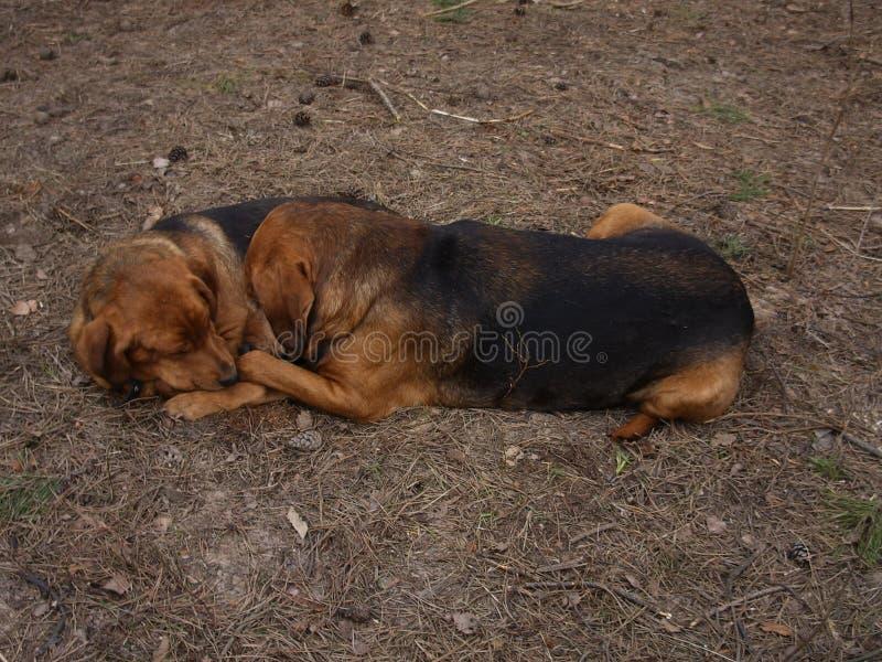 Αγάπη σκυλιών στοκ φωτογραφία με δικαίωμα ελεύθερης χρήσης