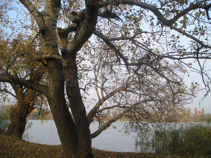 Αγάπη των δέντρων στοκ εικόνες