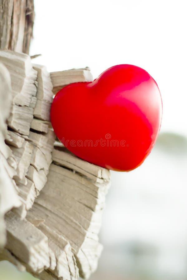Αγάπη φύσης στοκ εικόνα με δικαίωμα ελεύθερης χρήσης