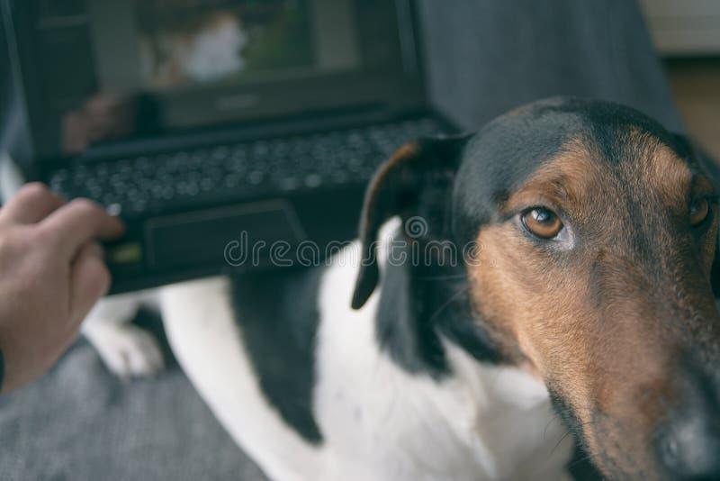 αγαθό σκυλιών στοκ εικόνα με δικαίωμα ελεύθερης χρήσης