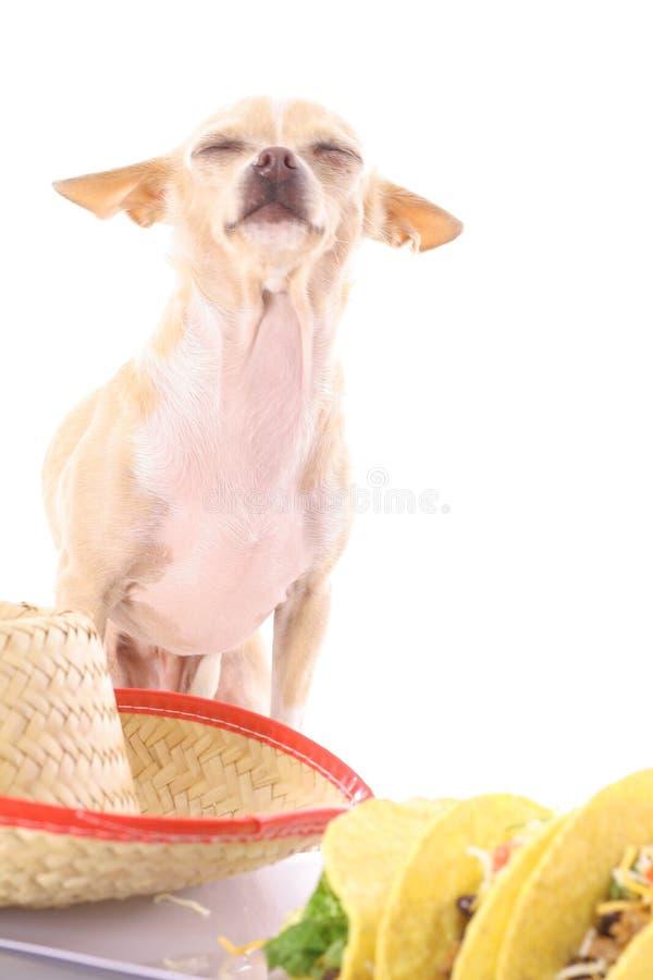 αγαπώ τα tacos στοκ φωτογραφίες με δικαίωμα ελεύθερης χρήσης