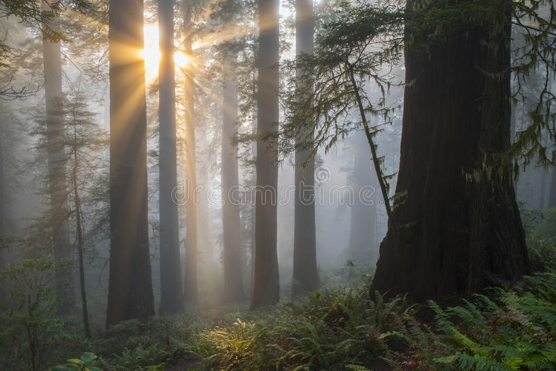 Αγγελικός-όπως τις ηλιαχτίδες στοκ φωτογραφία
