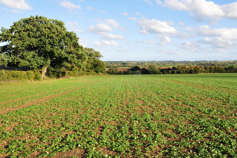 αγγλική όψη καλλιεργήσιμου εδάφους επαρχίας στοκ φωτογραφίες με δικαίωμα ελεύθερης χρήσης