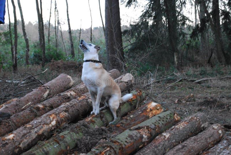 Αγγλική φθινοπωρινή δασώδης περιοχή στοκ φωτογραφίες