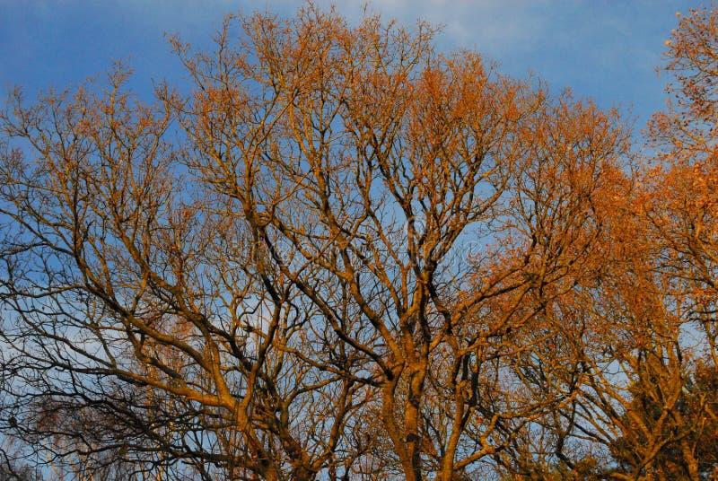 Αγγλική φθινοπωρινή δασώδης περιοχή στοκ εικόνες