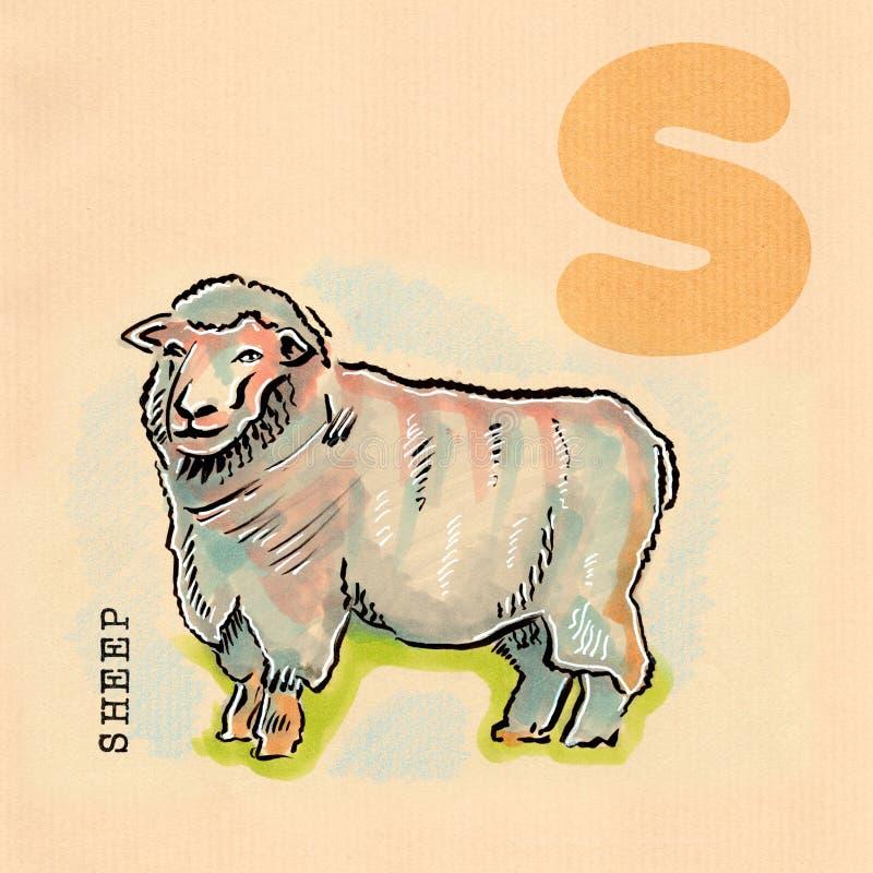 Αγγλικό αλφάβητο, πρόβατα απεικόνιση αποθεμάτων