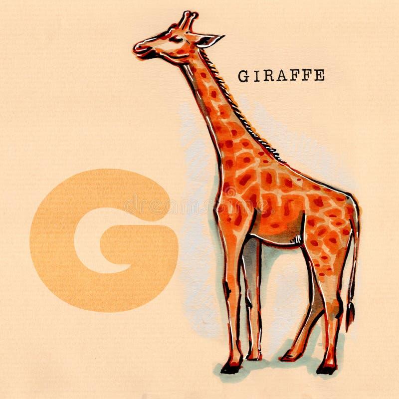 Αγγλικό αλφάβητο, Giraffe ελεύθερη απεικόνιση δικαιώματος