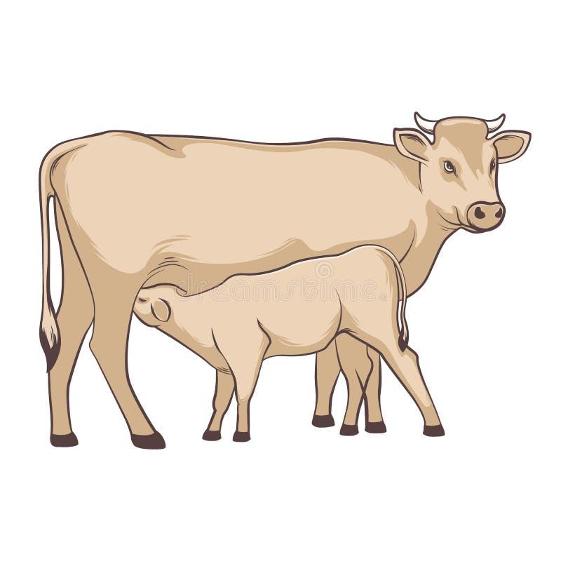 Αγελάδα και μόσχος Η αγελάδα ταΐζει το μόσχο Τα βοοειδή είναι βοημένα o διανυσματική απεικόνιση