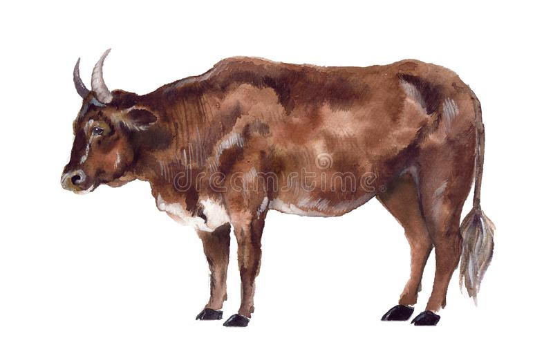 Αγελάδα Watercolor στο άσπρο υπόβαθρο ελεύθερη απεικόνιση δικαιώματος