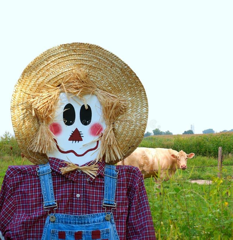 Download αγελάδες που φρουρούν το σκιάχτρο Στοκ Εικόνα - εικόνα από χαμόγελο, plaid: 1527077