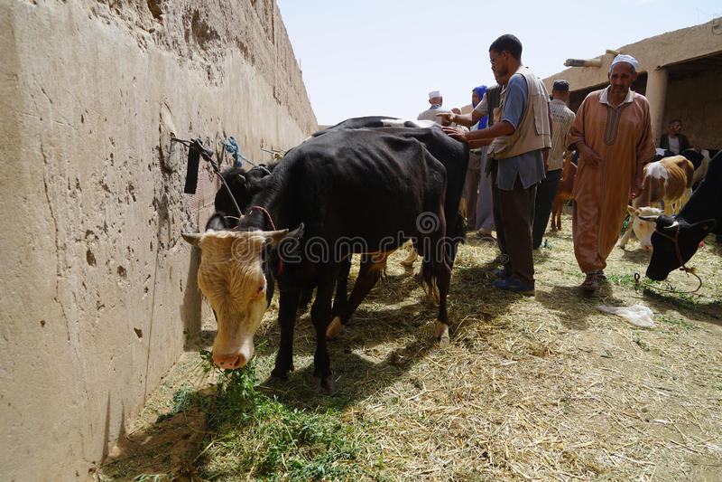 Αγελάδες πωλητών στο παζάρι της πόλης Rissani στο Μαρόκο στοκ εικόνες