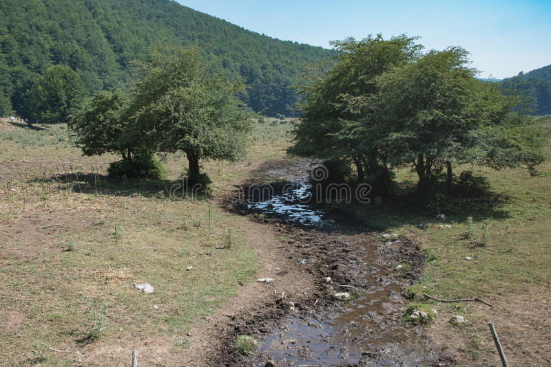 Αγελάδα και λιβάδια Irpinia apennines ιταλικά Campania Νότος Ita στοκ φωτογραφίες