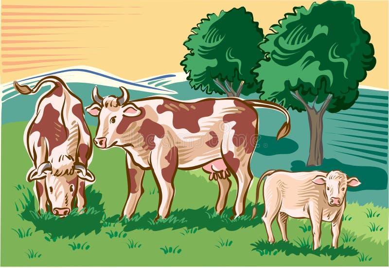 Αγελάδες και μόσχος ελεύθερη απεικόνιση δικαιώματος