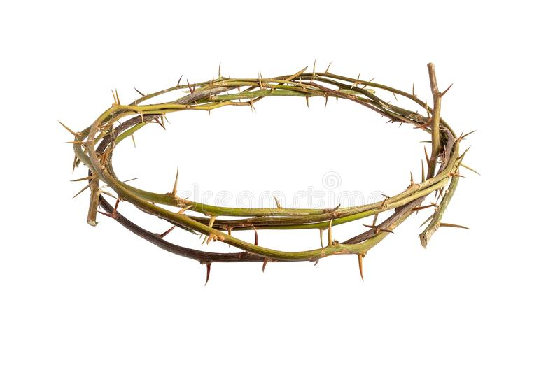 Αγκάθια κορωνών του Ιησούς Χριστού στο απομονωμένο άσπρο υπόβαθρο στοκ φωτογραφίες
