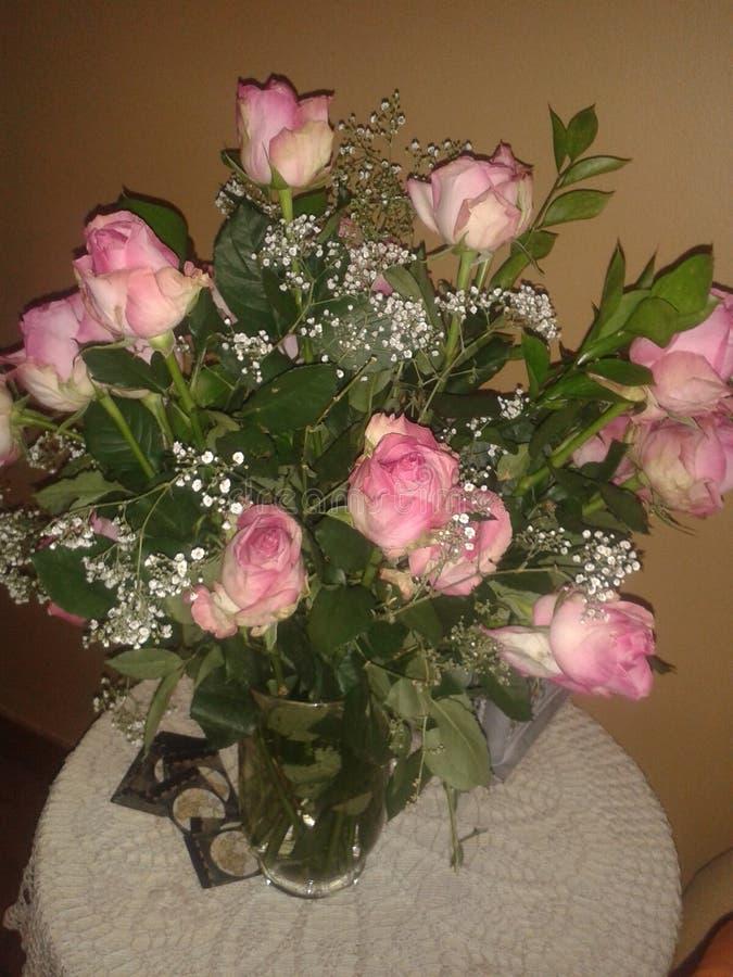 Αγκάθια τριαντάφυλλων ν στοκ εικόνες με δικαίωμα ελεύθερης χρήσης