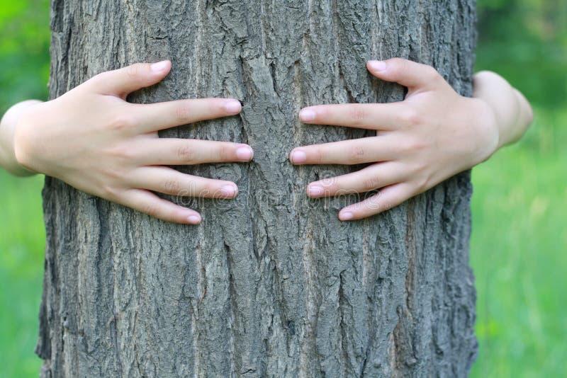 Αγκάλιασμα ενός δέντρου στοκ φωτογραφία
