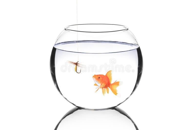 αγκίστρι αλιείας ψαριών κύ στοκ φωτογραφία