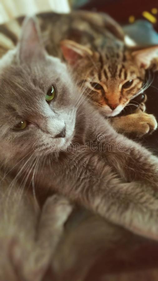 Αγκαλιάστε στοργικά buddys στοκ φωτογραφία με δικαίωμα ελεύθερης χρήσης