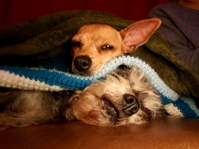 Αγκαλιά κουταβιών για την ώρα για ύπνο στοκ φωτογραφία με δικαίωμα ελεύθερης χρήσης
