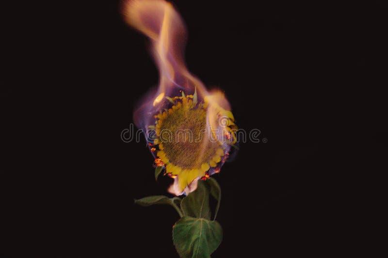 Αγκαλιασμένος με την πυρκαγιά στοκ εικόνα με δικαίωμα ελεύθερης χρήσης