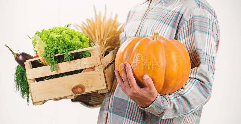Αγοράστε τα φρέσκα homegrown λαχανικά Ακριβώς από τον κήπο Η Farmer φέρνει τα λαχανικά συγκομιδών κιβωτίων ή καλαθιών Άριστη ποιό στοκ εικόνες με δικαίωμα ελεύθερης χρήσης