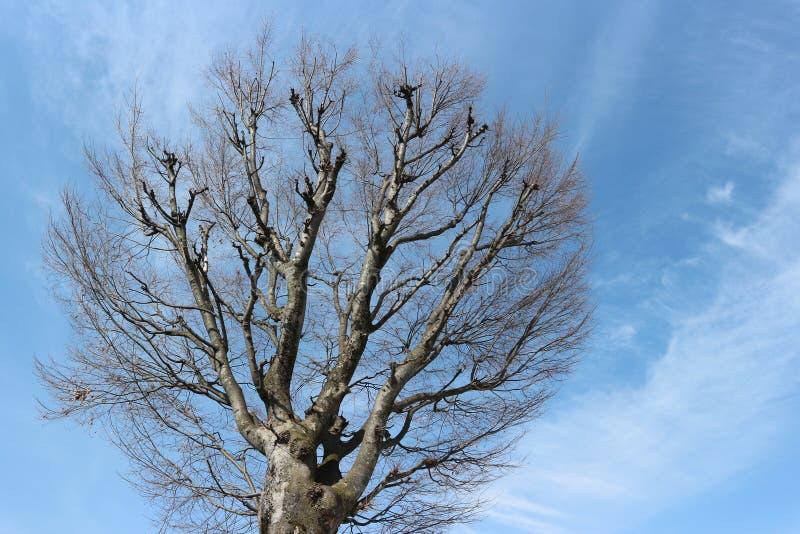 Αγορά Ιαπωνία, δέντρα του Νάγκουα ανοίξεων χωρίς φύλλα ενάντια στον ουρανό στοκ φωτογραφίες