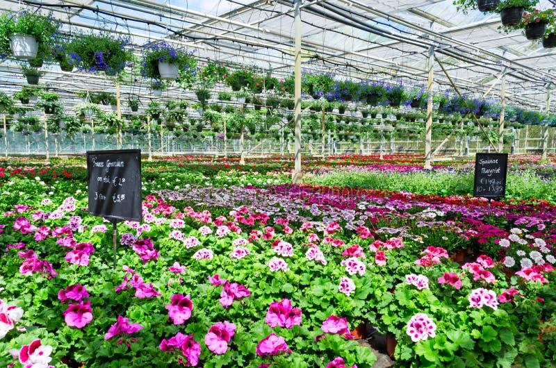 Αγορά κεντρικών λουλουδιών κήπων στοκ φωτογραφία