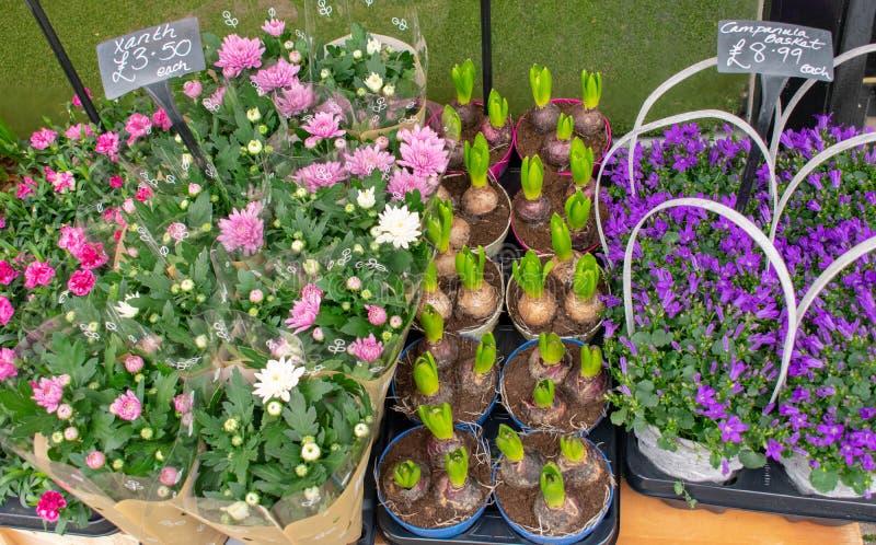 Αγορά λουλουδιών με τα ρόδινα, άσπρα και πορφυρά λουλούδια στοκ εικόνες