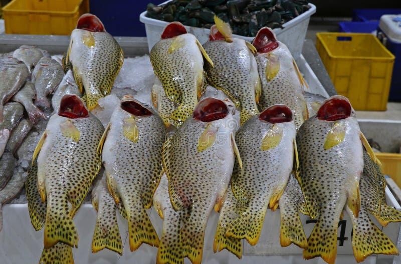 Αγορά ψαριών του Ντουμπάι με τα τοπικά ψάρια στοκ εικόνα με δικαίωμα ελεύθερης χρήσης