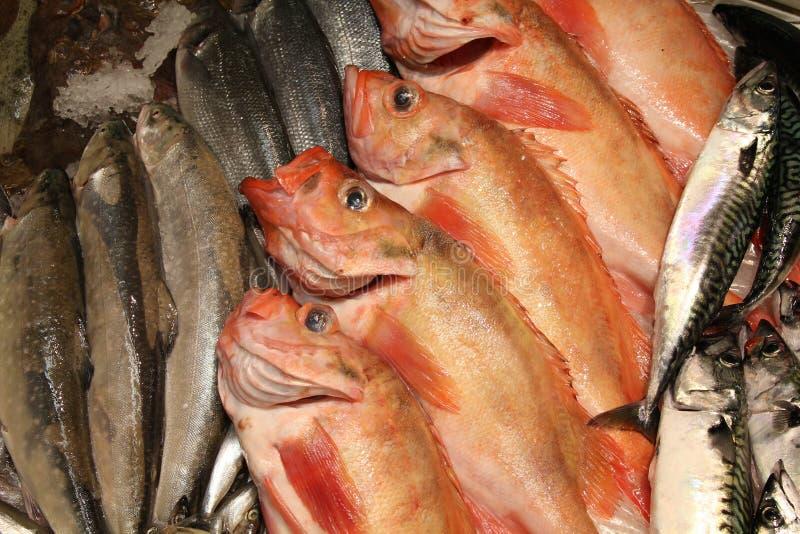 αγορά ψαριών στοκ φωτογραφία