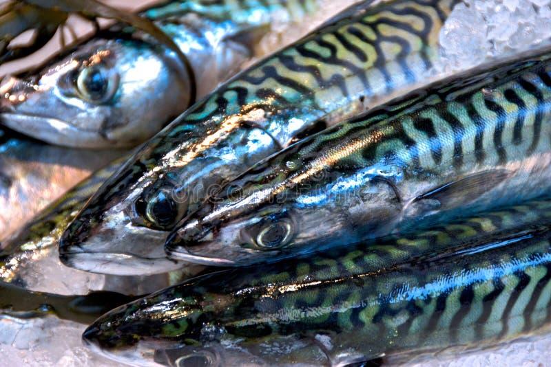 Αγορά ψαριών @ στοκ εικόνες με δικαίωμα ελεύθερης χρήσης