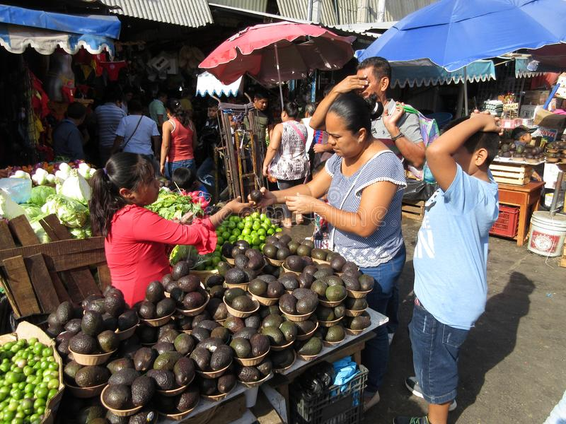 Αγορές για τα αβοκάντο σε Chilplancing στοκ φωτογραφία με δικαίωμα ελεύθερης χρήσης