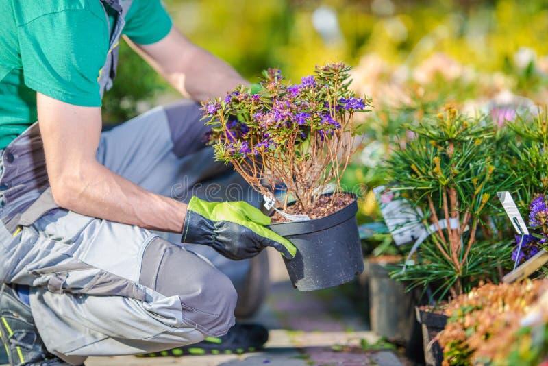 Αγορές καταστημάτων κήπων στοκ εικόνα