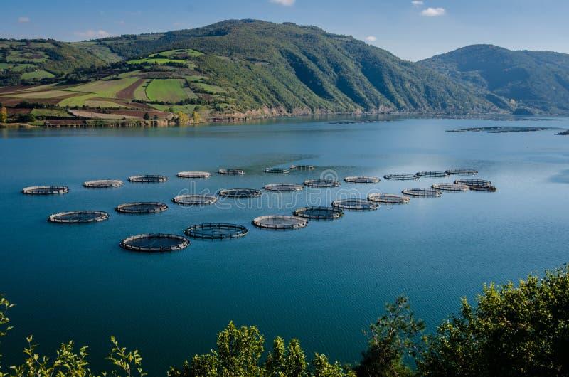 Αγροκτήματα ψαριών στοκ φωτογραφία με δικαίωμα ελεύθερης χρήσης