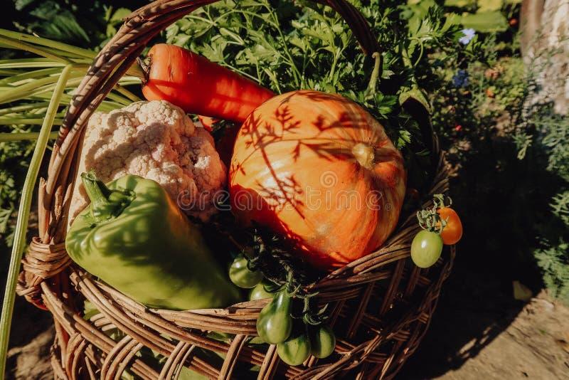 Αγροτικά λαχανικά στο καλάθι Φυτικός φρέσκος κήπος οργανικός στοκ εικόνες με δικαίωμα ελεύθερης χρήσης