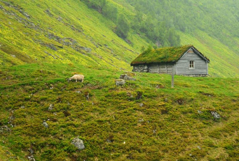 αγροτικά πρόβατα στοκ εικόνα με δικαίωμα ελεύθερης χρήσης